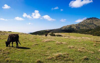 台北:山脈 | 陽明山國家公園。世界級的風景