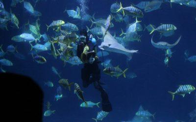 屏東:車城 | 海洋生物樂園。國立海洋生物博物館