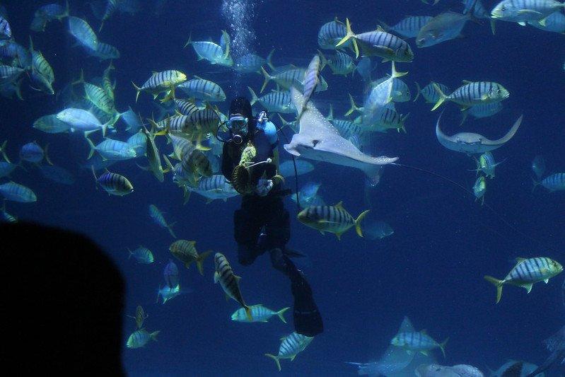 屏東:車城   海洋生物樂園。國立海洋生物博物館